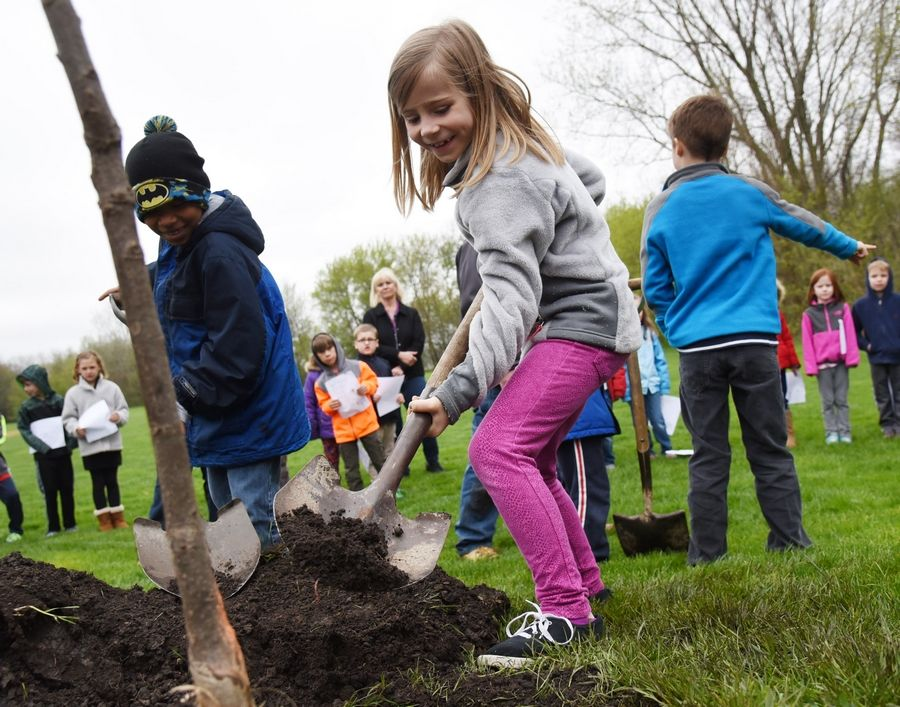 Meadowview School first-grader Mearah Ward, center, is all smiles as she helps plant a white oak tree near the school Friday for Arbor Day.