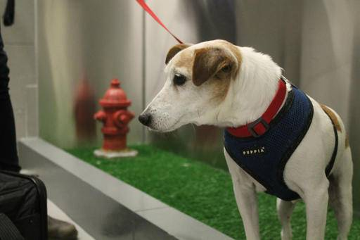Wee-lief! Dogs get airport bathrooms of their own