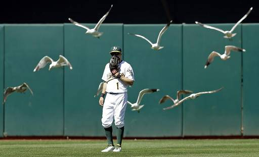 A flock of birds fly over Oakland Athletics outfielder Billy Burns in the eighth inning of a baseball game against the Houston Astros, Sunday, May 1, 2016, in Oakland, Calif.