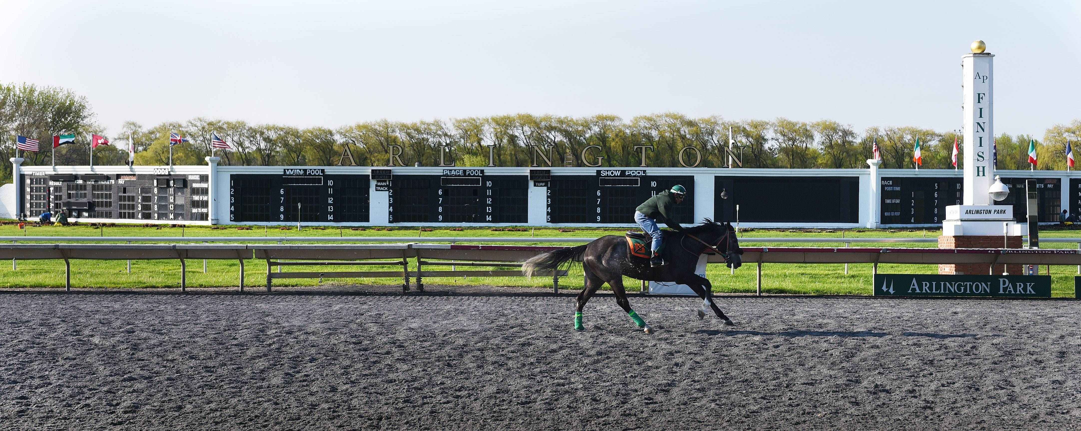 A horse runs during the morning workout at Arlington International Racecourse on Thursday in preparation for opening weekend at the Arlington Heights track. It opens Friday, with Derby Day festivities on Saturday.