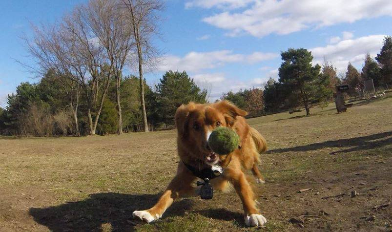 Tula, a 4-year-old rescue dog from White Bear Lake, Minn., is the photographer behind Canine Happy Hour, which features pictures of dogs at dog parks, from the perspective of a dog; she is outfitted with a GoPro camera.