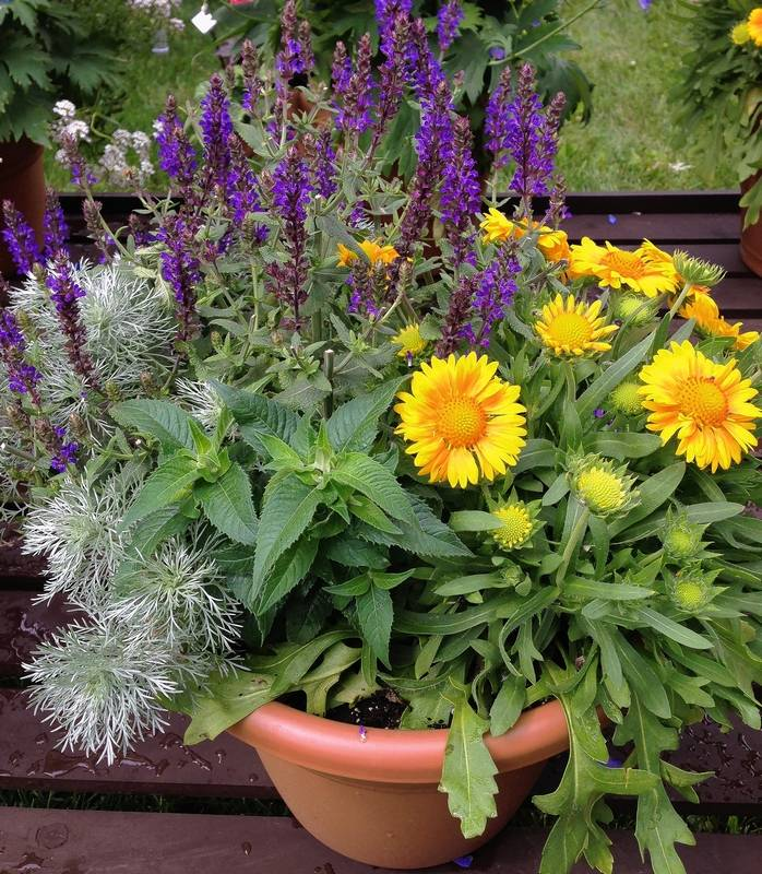 Consider Using Perennials In Your Containers