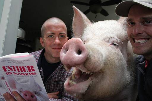 Pigs Can Make Great Pets But Are Not For Everyone