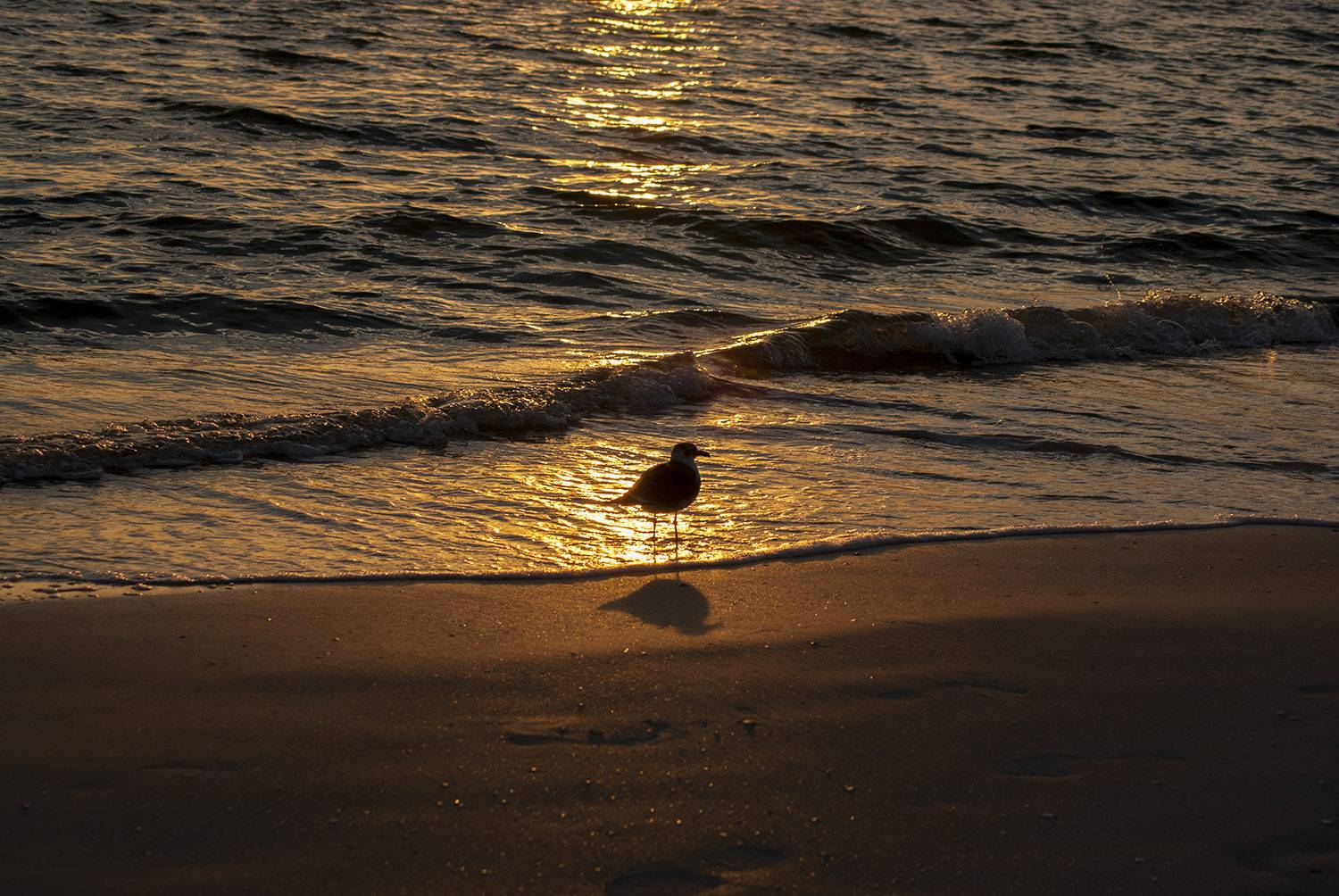 A sandpiper creates a silhouette during the sunset on the beach at Sanibel Island, Florida.