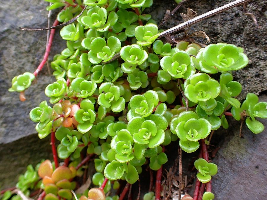 Groundcovers Are Taking Up Residence In The Modern Garden