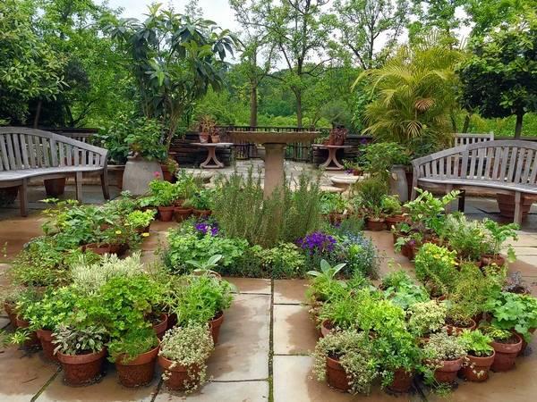 Dumbarton gardeners pay homage to historic herb garden