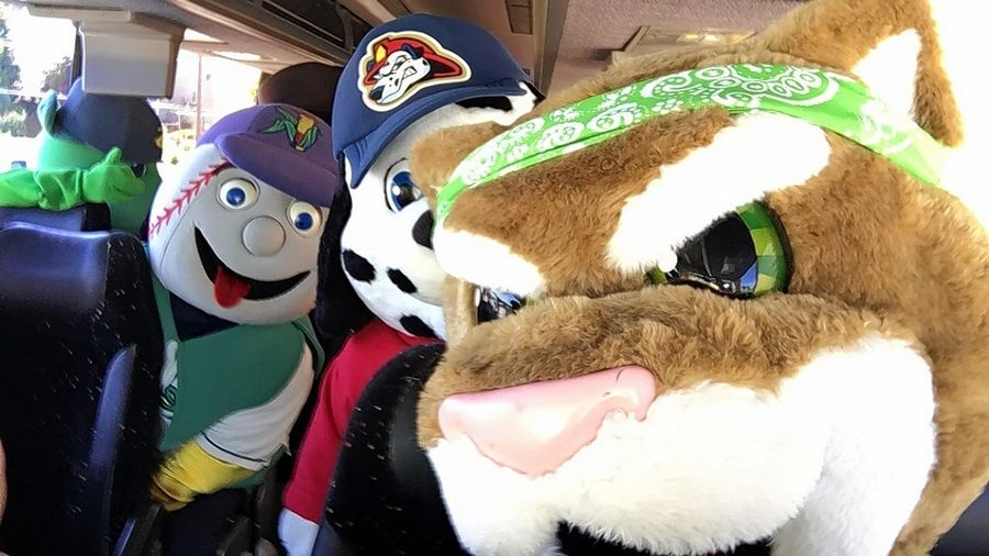 Had to smile at the Kane County Cougars' mascot, Ozzie, who snapped a selfie earlier this week in honor of #nationalselfieday earlier this week.