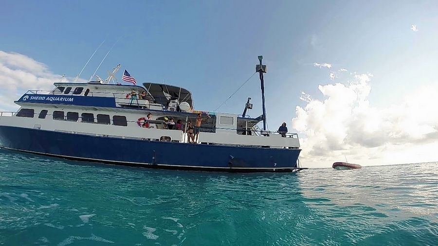 Four North Central College students were part of a group that spent nine days on this Shedd Aquarium ship in the Bahamas studying conservation biology and marine ecosystems.