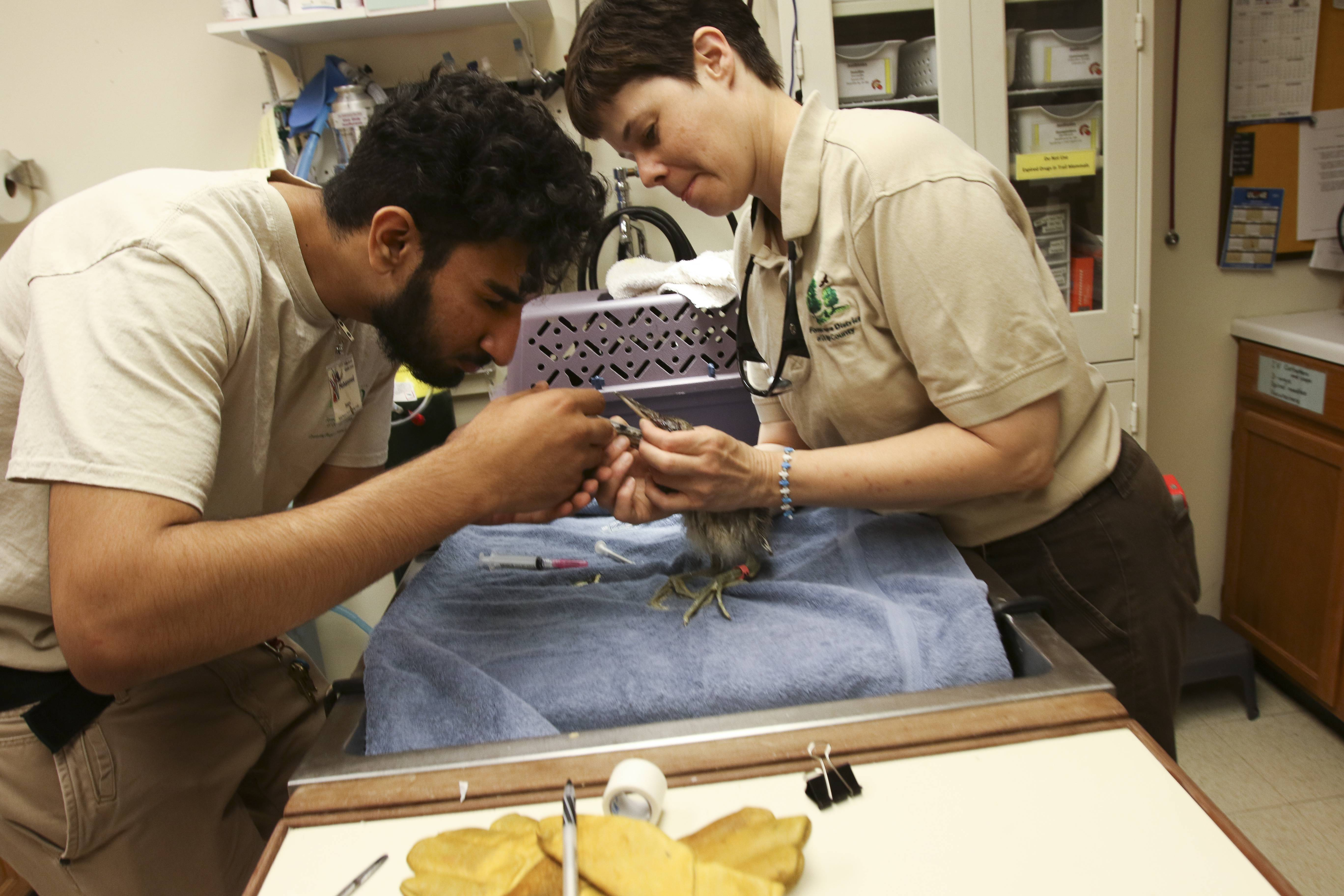 Willowbrook Wildlife Center to celebrate 60 years