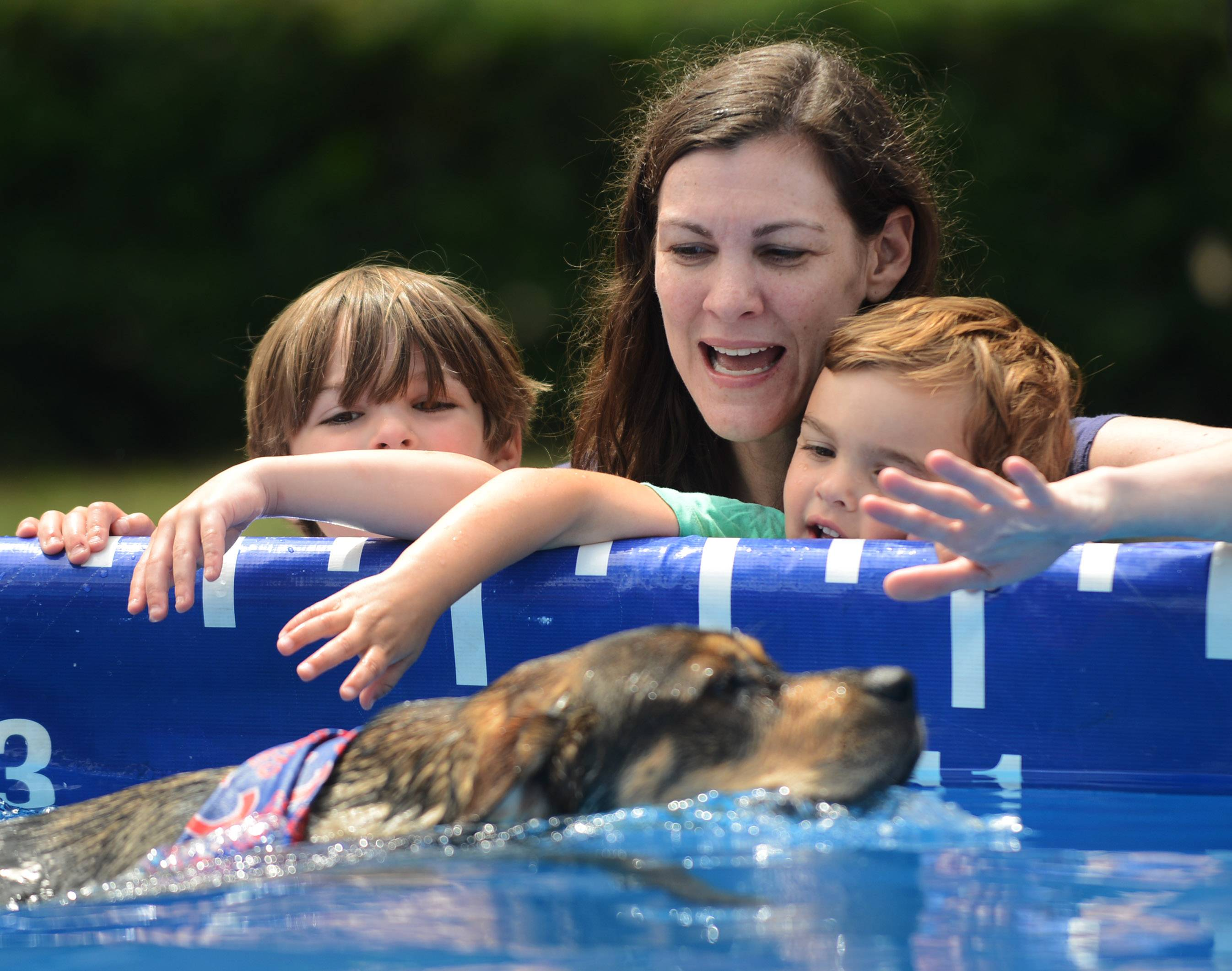 Laura Guarnieri of Lake Bluff, and her sons, Sam, 5, left, and Charlie, 3, watch a dog swim past in a portable pool during the Dog Days of Summer event in Libertyville Saturday.