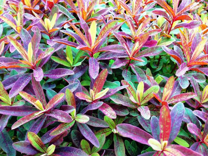 Add Interest To The Landscape With Variegated Plants