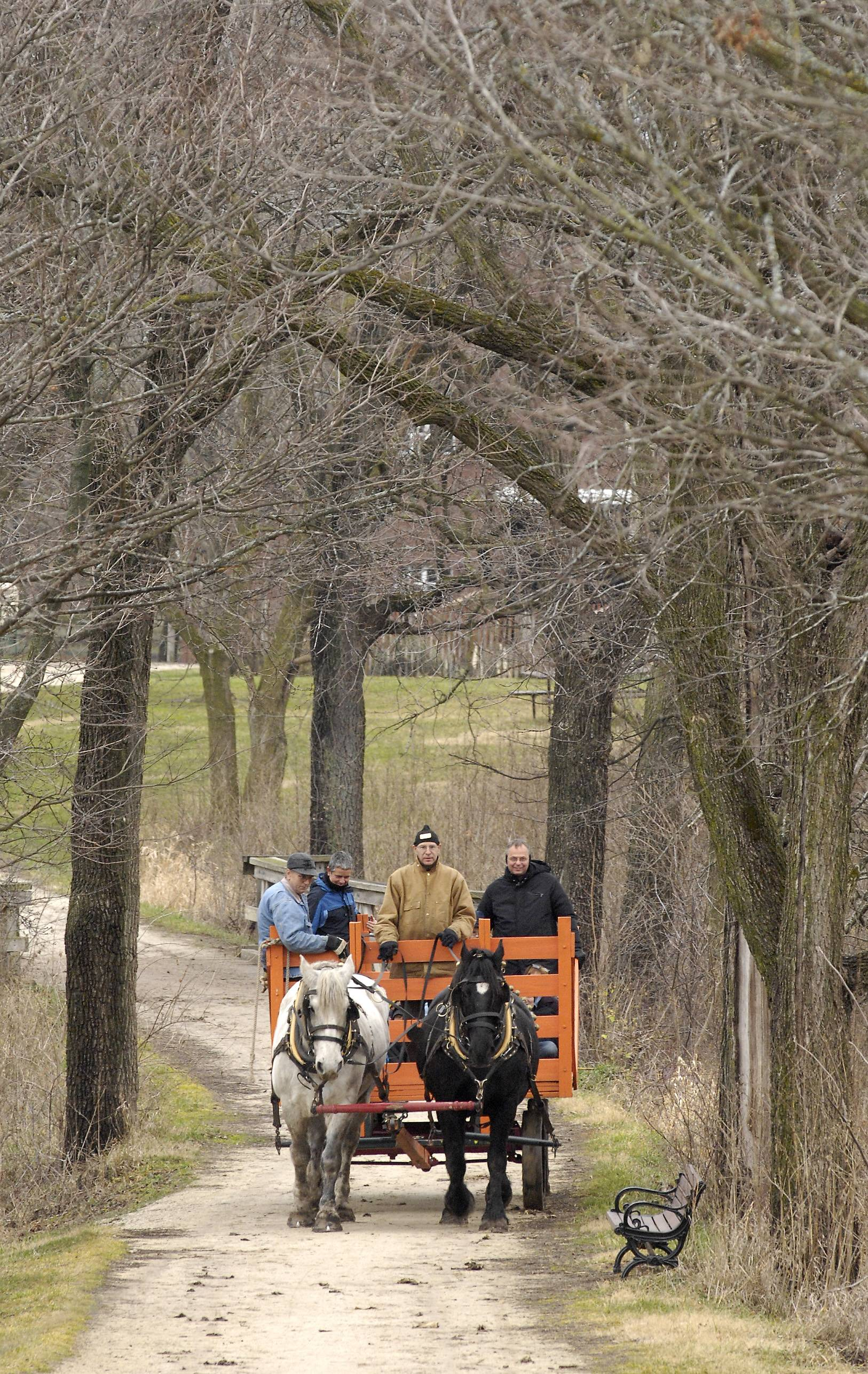 Horse-drawn wagon rides will be offered during the spring at Kline Creek Farm in West Chicago as part of a DuPage Forest Preserve District plan to offer year-round rides.