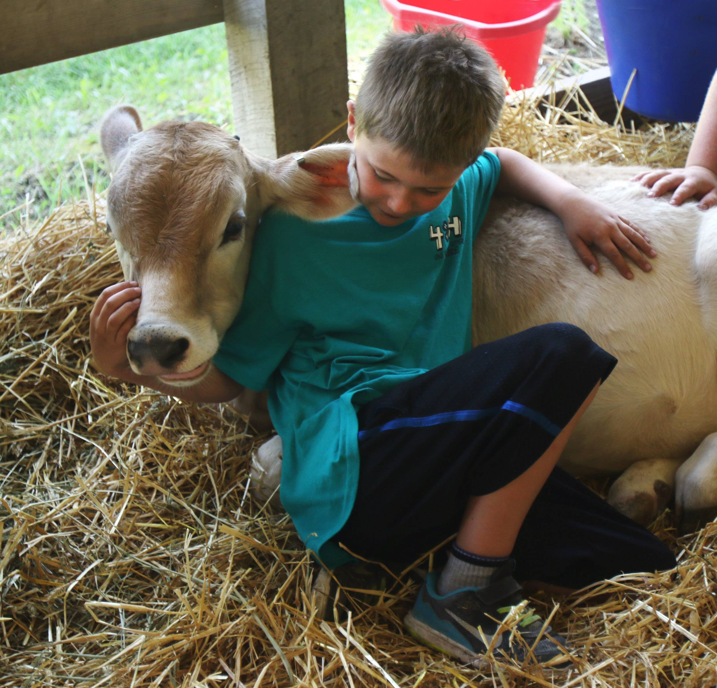 Casey Sramek, 8, of Antioch lays down with his calf during the Lake County Fair on Wednesday at the Lake County Fairgrounds in Grayslake. The first day featured farm animal judging, dog demonstrations, the Lake County beauty pageant, Banana Derby, pig races and motocross.