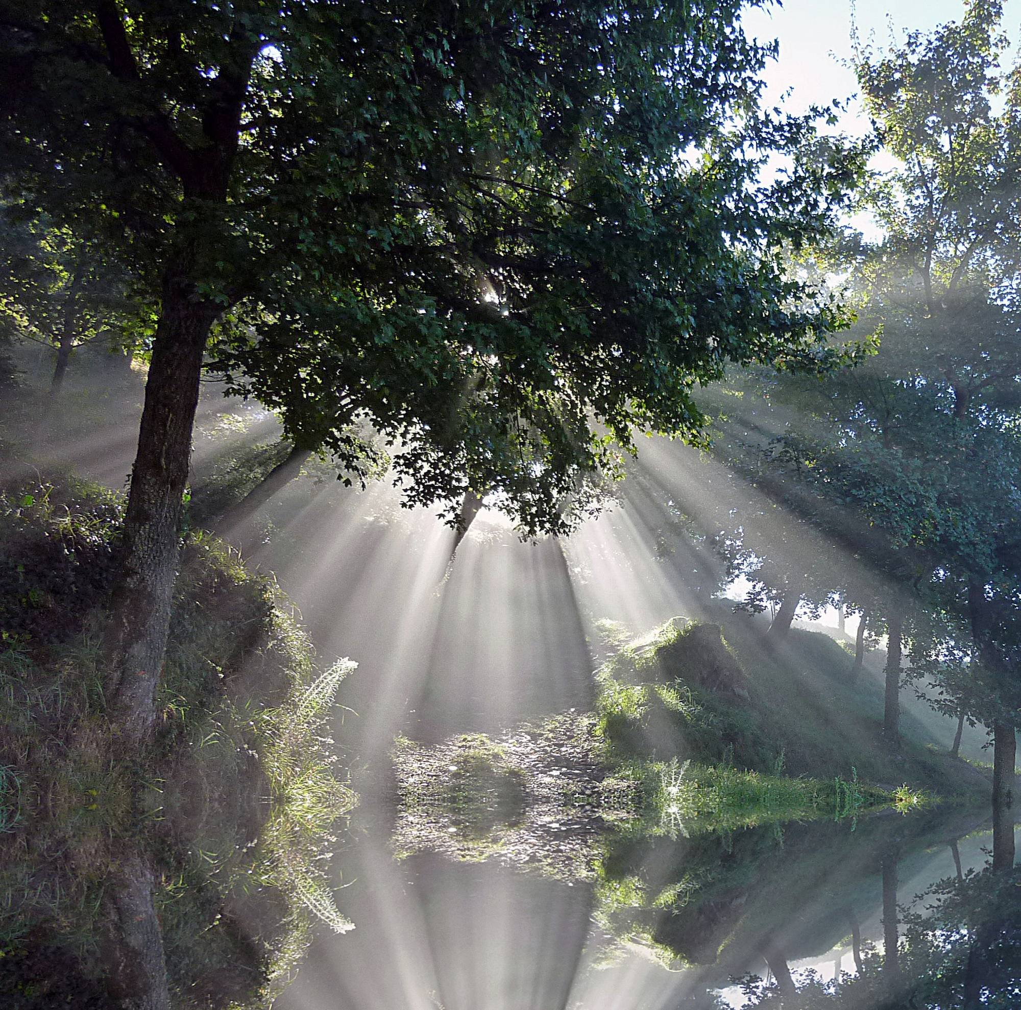 I was fortunate, on an early morning walk in Tuscany Italy, to see the beginning of the day with rays from heaven coming through a tree. I was ecstatic to be able to capture the image. I spent the morning looking at the image on my camera. I went back the next day at approximately the same time but I never saw the rays again. It is Gods Rays Reflected!