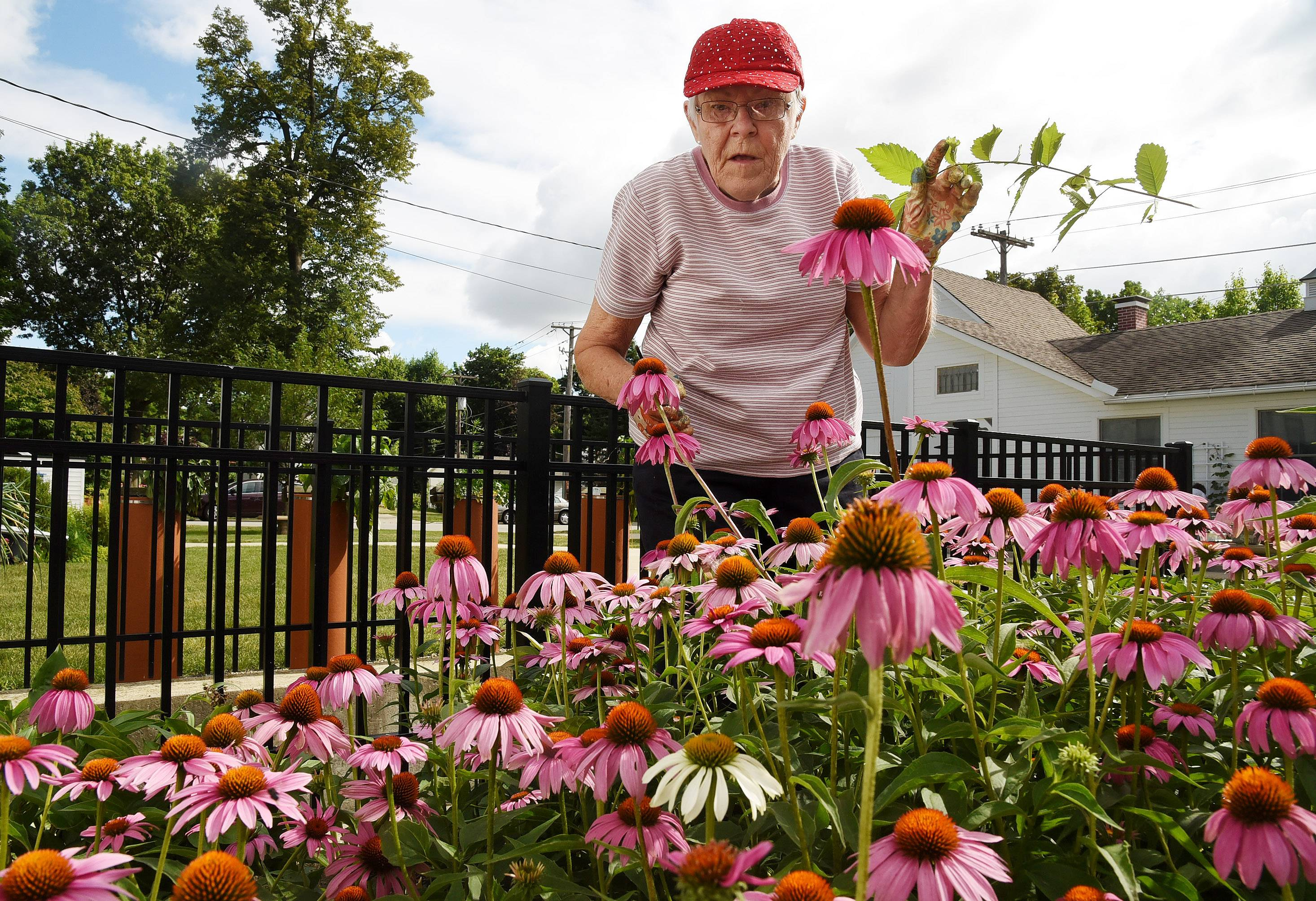 Rita Waters weeds a plant bed at the Mount Prospect Historical Society.