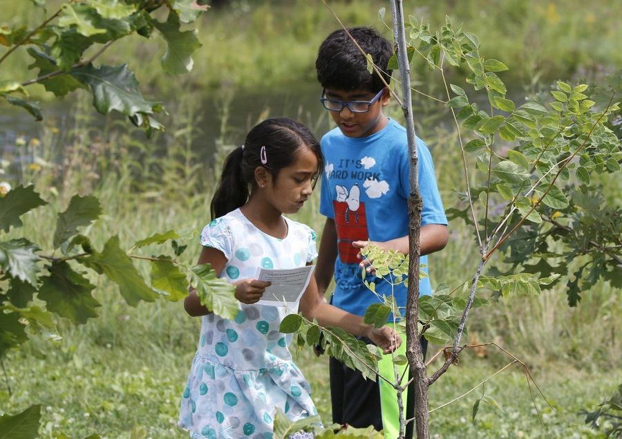 "Shriya Adavadkar and her brother Rohan Adavadkar of Naperville gather leaves from trees to construct letters from an ancient alphabet Saturday in the ""See the Forest"" garden/sculpture on the grounds of the Knoch Knolls Nature Center in Naperville."