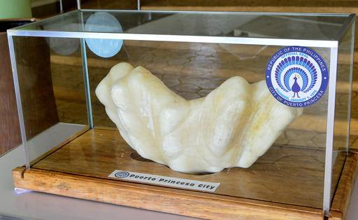 In this photo provided by Puerto Princesa Tourism Office, shows a giant pearl measuring 30cm wide (1ft), 67cm long (2.2ft) and weighing 34kg (75lb) is displayed in the lobby of the Puerto Princesa City Hall in Puerto Princesa city, Palawan province in southwestern Philippines Thursday, Aug. 25, 2016. Puerto Princesa Tourism Officer Aileen Amurao said the giant pearl was found by a relative fisherman ten years ago and entrusted to her for safekeeping and eventually to the mayor of the city. The still-to-be-authenticated find is said to be the largest in the world and would likely be valued in excess of US$100 million. (Herald Hugo/PPTO, via AP)