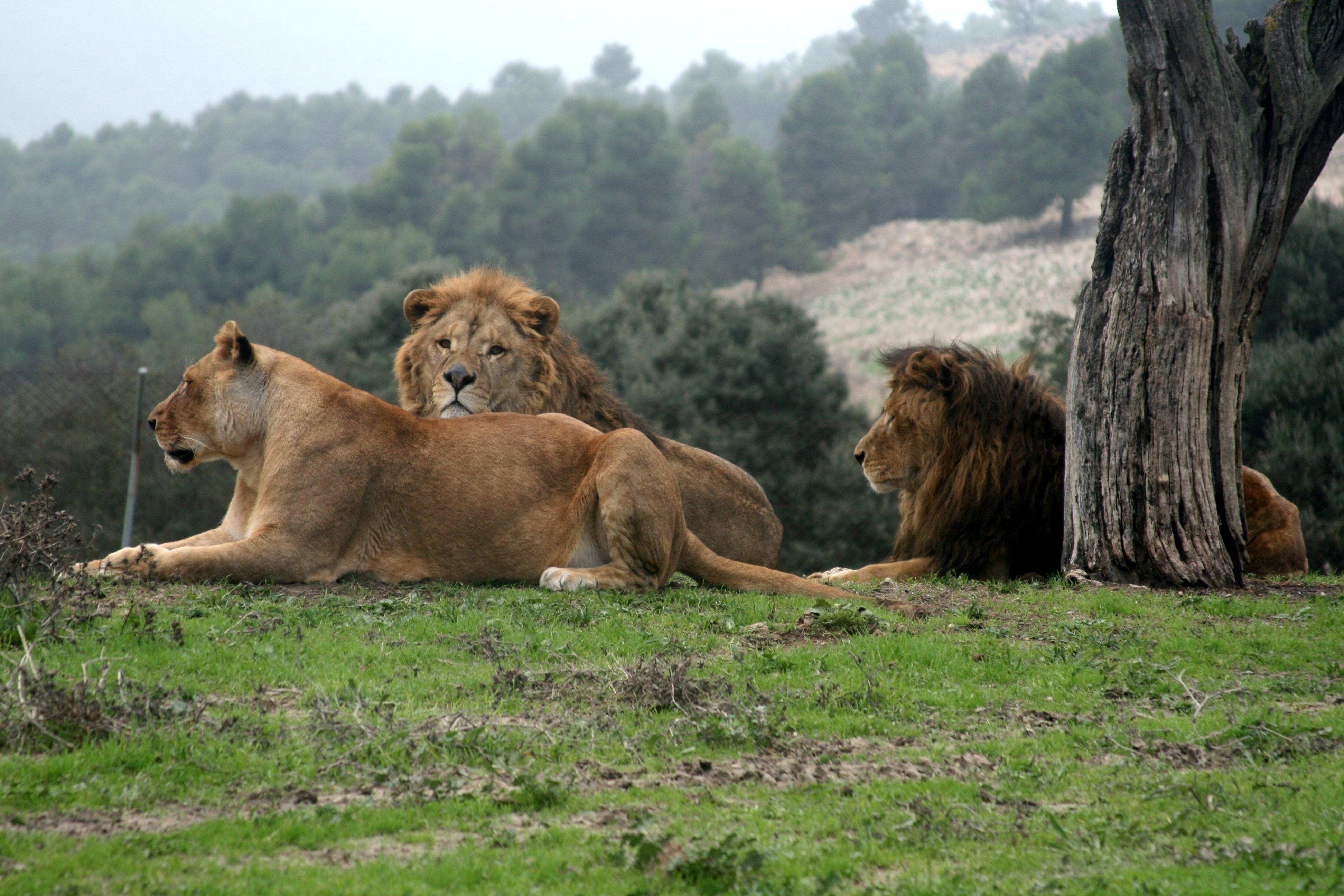 My brother lives in Spain and on one of my visits there we went to a Safari Park where I took this photo.