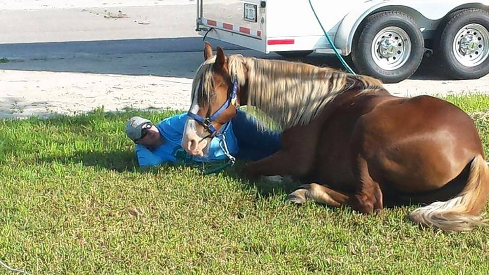 Horse and mule owners are invited to try an overnight camp out with their animals, during two free equestrian days at local campgrounds.