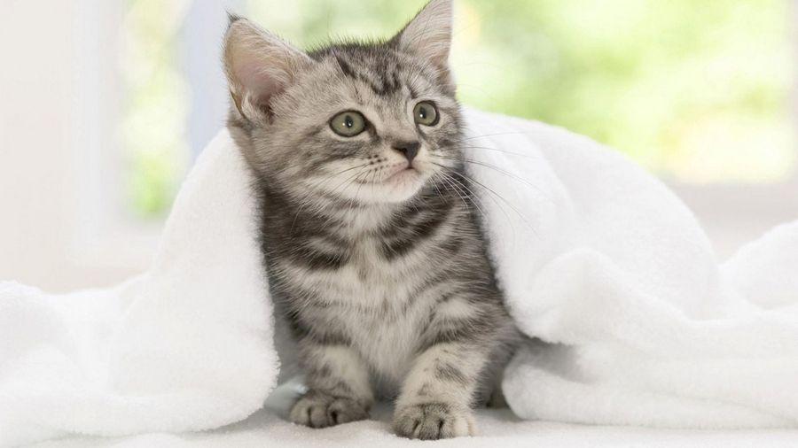 Does looking at this kitten make you smile? Researchers say there is a physiological reason for that.