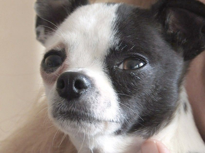 Will Mundelein ban the sale of dogs from puppy mills?