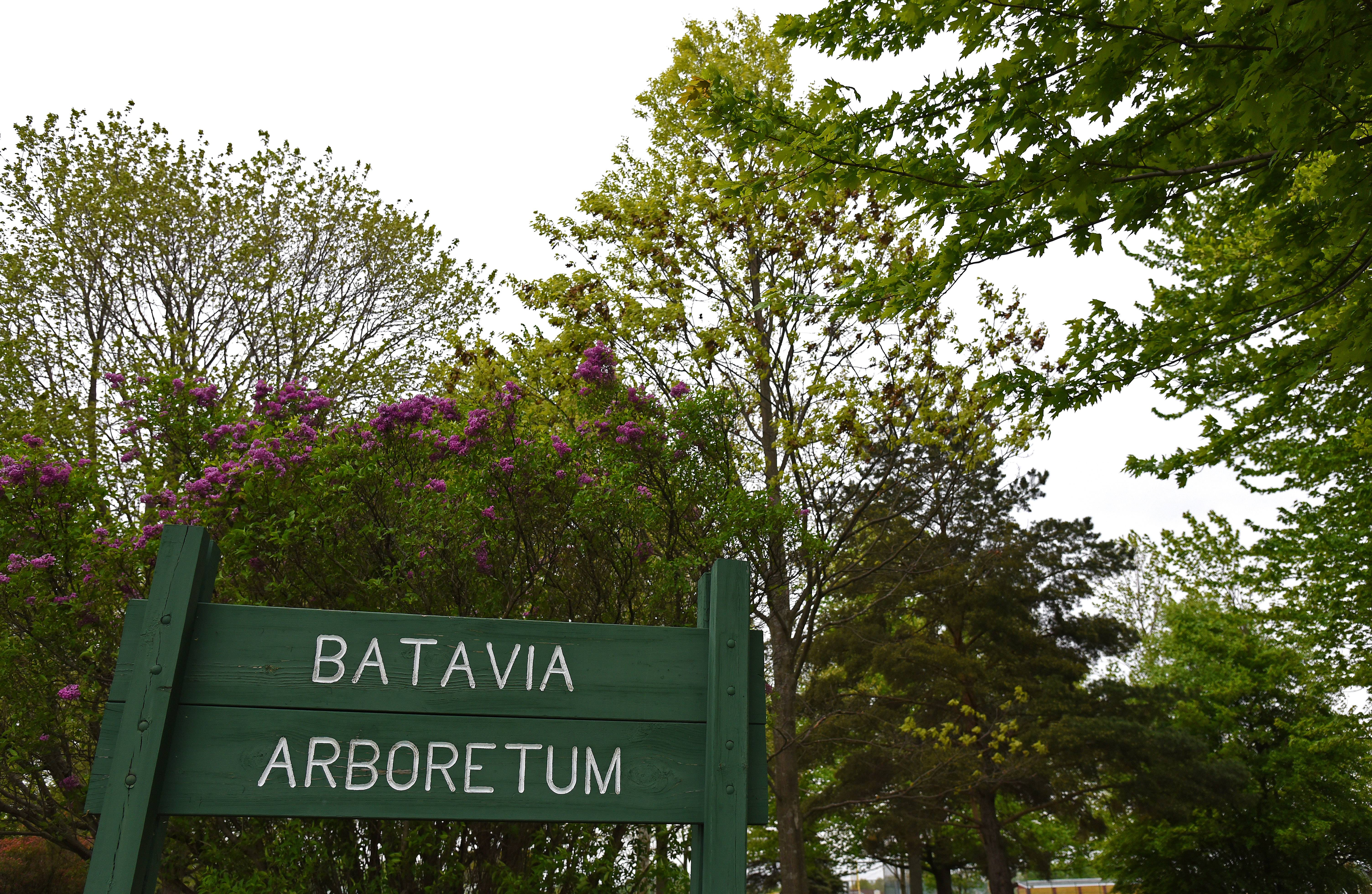 The Batavia group Value Our Trees has raised enough funds to place a plaque in the Batavia Arboretum. The plaque will document the names of those for whom memorial trees were planted in the arboretum 50 years ago.