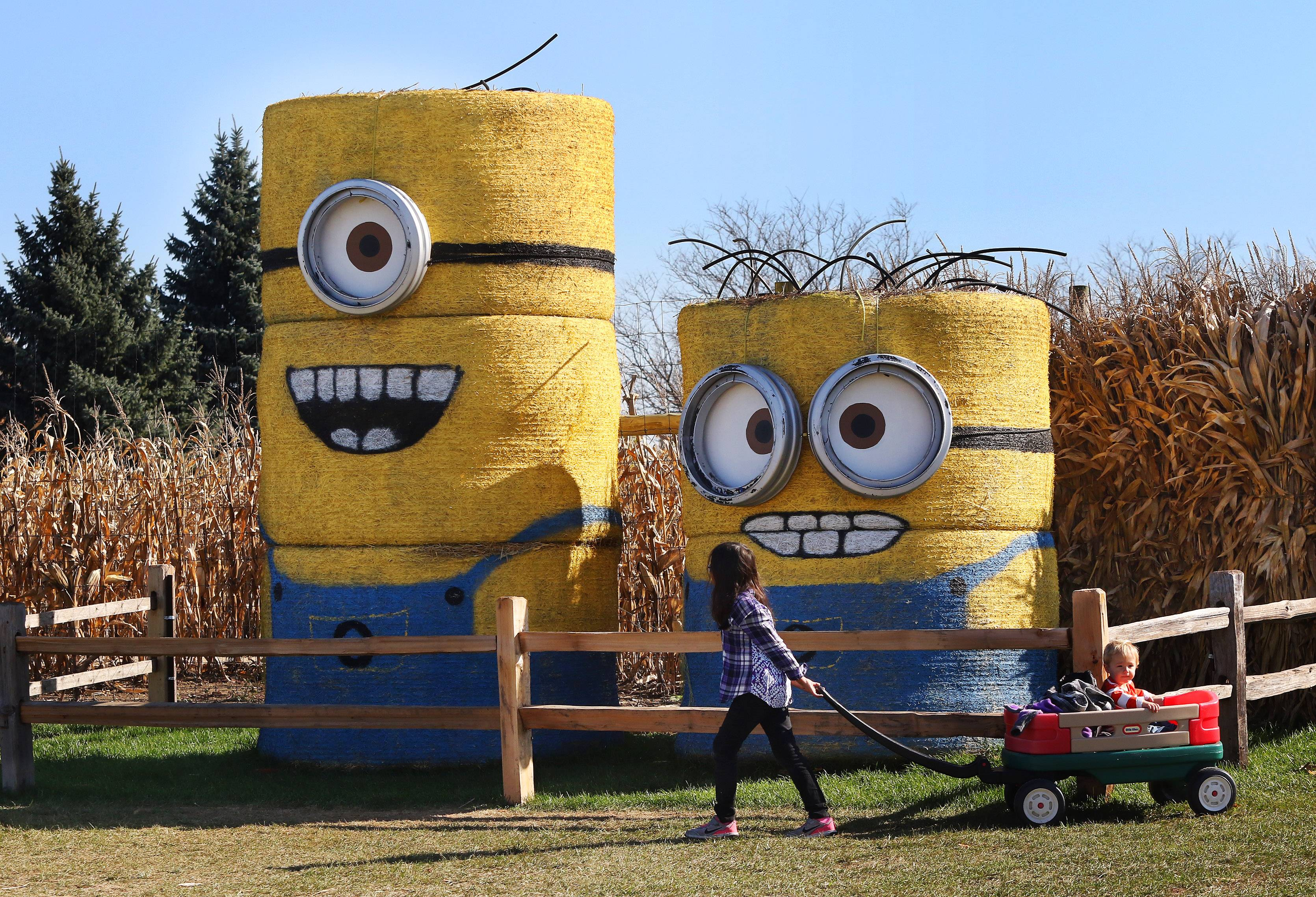 Sophia Boun, 8, of Hoffman Estates pulls a wagon carrying one-year-old Benjamin Innocenti of Lake Zurich past giant Minions made of hay during Fall Festival at Goebbert's Farm & Garden Center in South Barrington on Sunday.