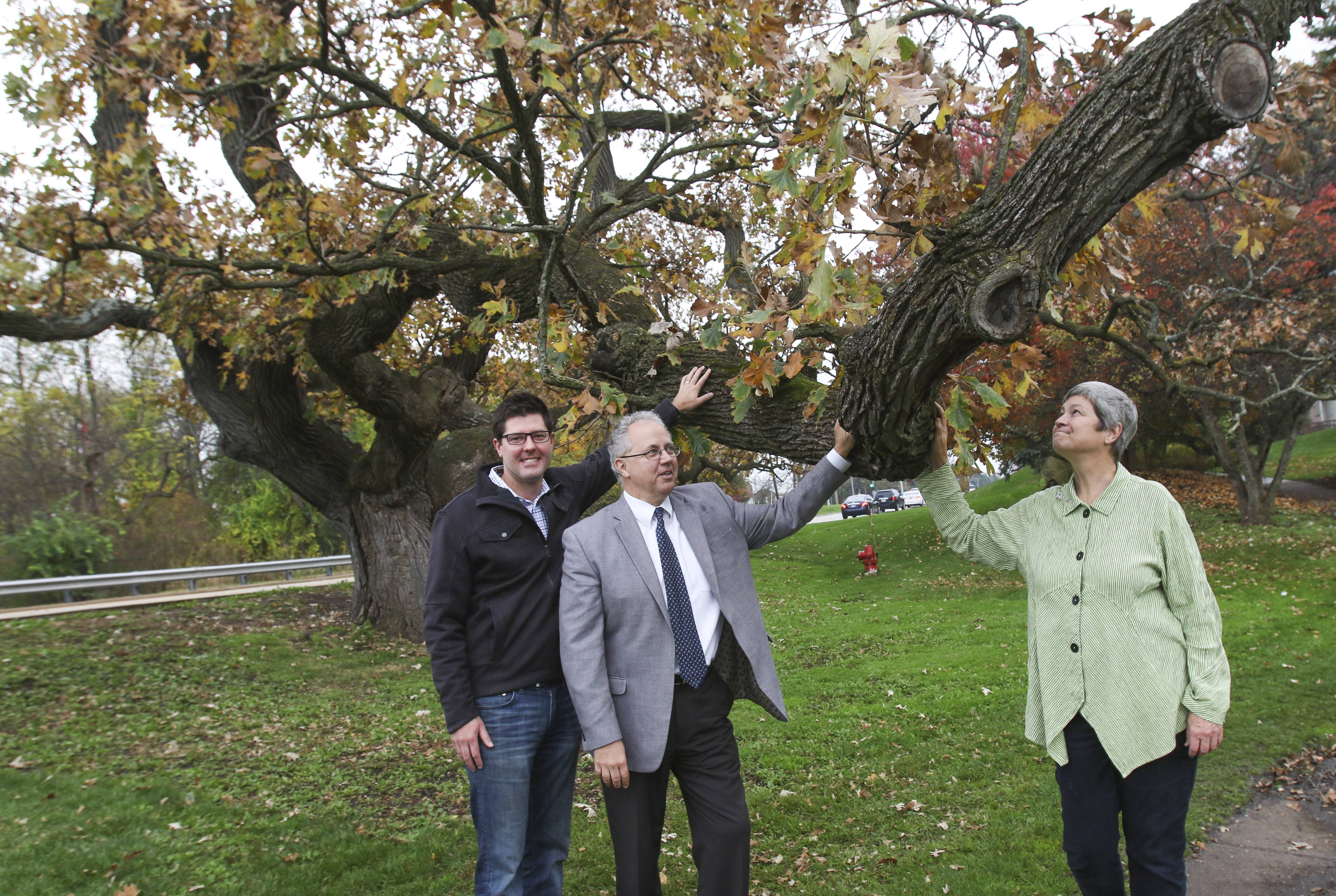 Long-living Naperville oak to find new life in art after decay