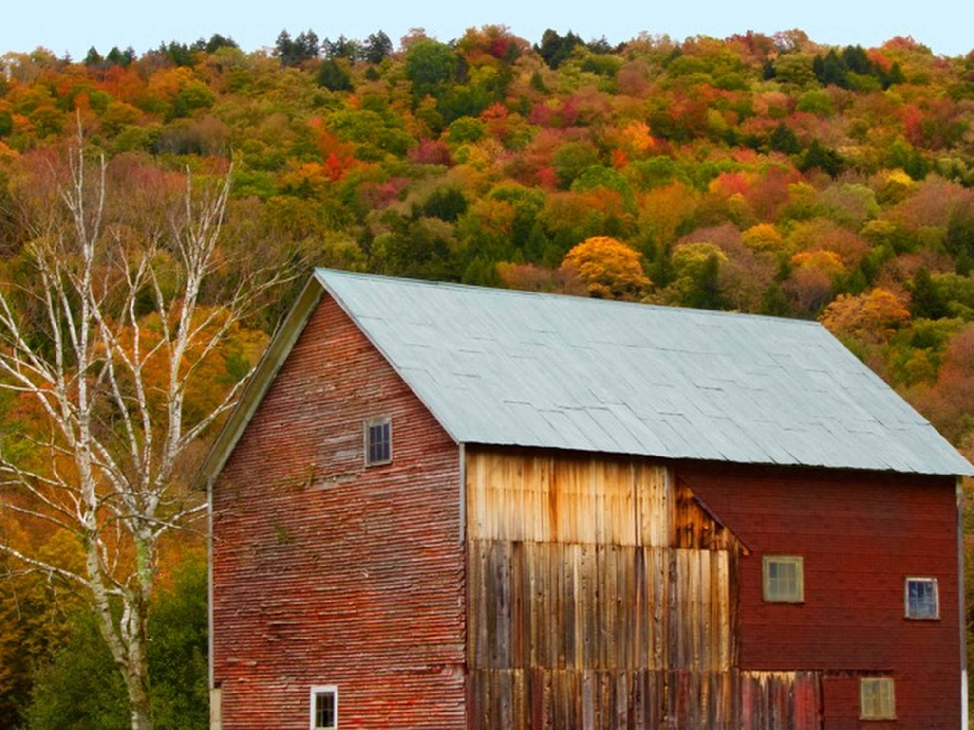 Fall is my favorite season, and I love old barns. I liked the contrast between the foliage, the bare tree, and the old barn boards. this photo was taken last year in Vermont.
