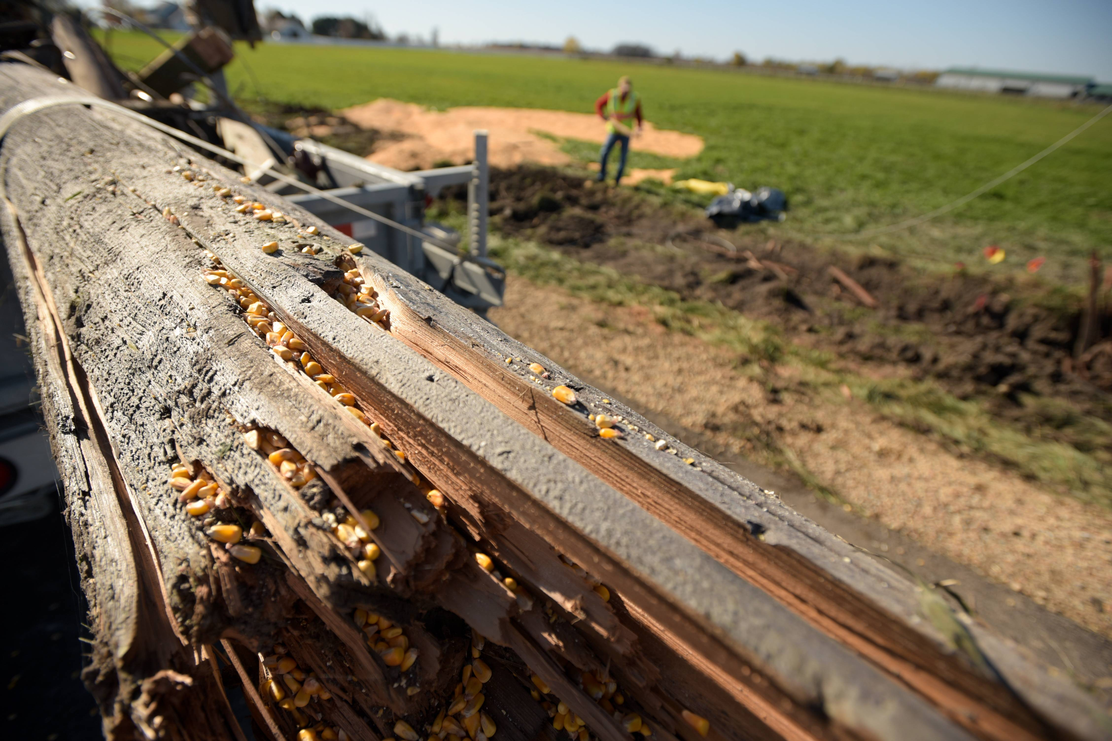 The remnants of a downed power pole covered in corn kernels rests on a trailer Sunday. The pole was knocked down when a pickup truck and semi truck hauling corn collided Saturday at the intersection of Meredith and Beith roads in Virgil Township, killing two Kane County teens.
