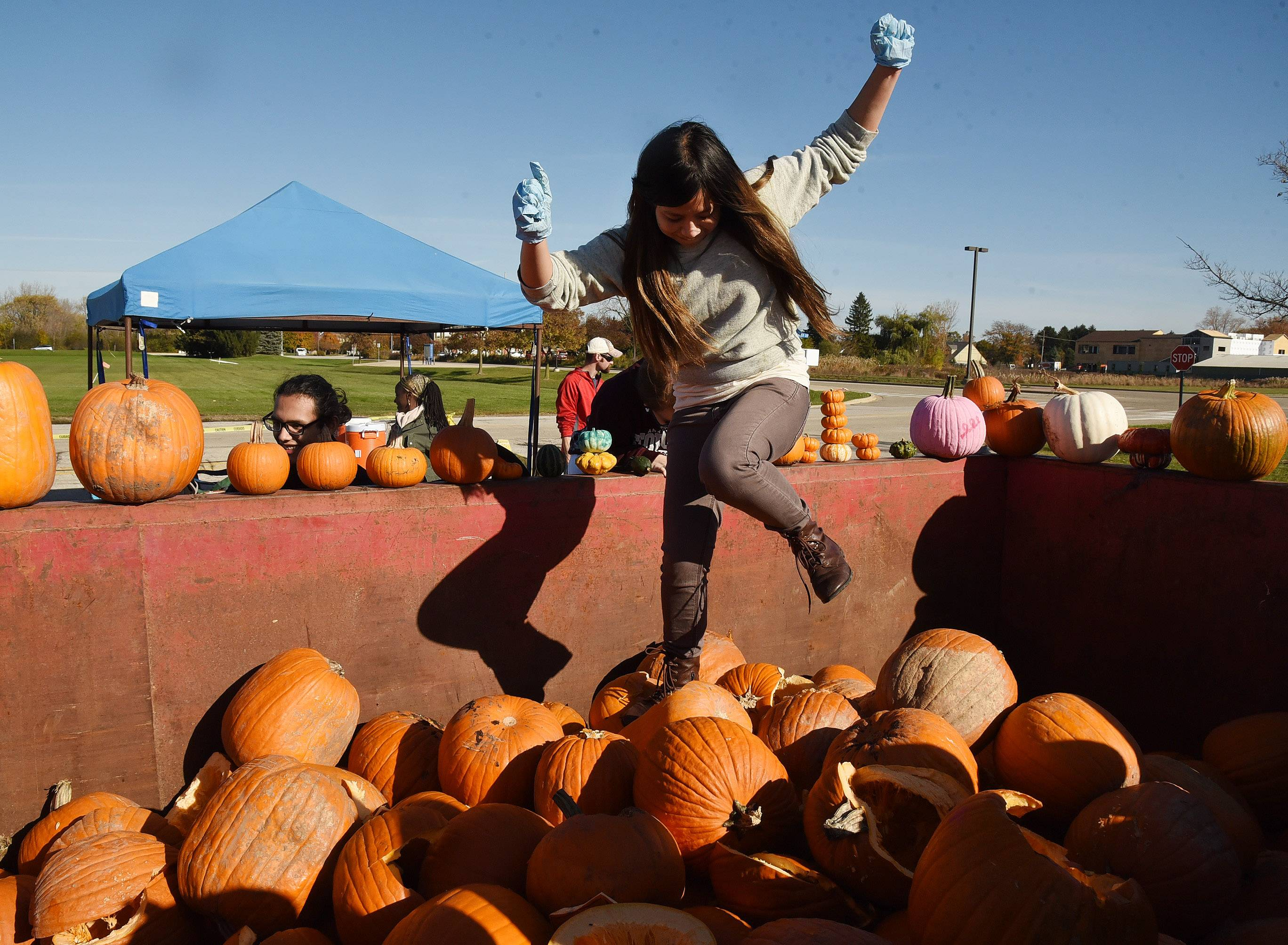 CLC Environmental Club member Stephanie Luz packs down a dumpster full of pumpkins, as the College of Lake County collects used pumpkins.
