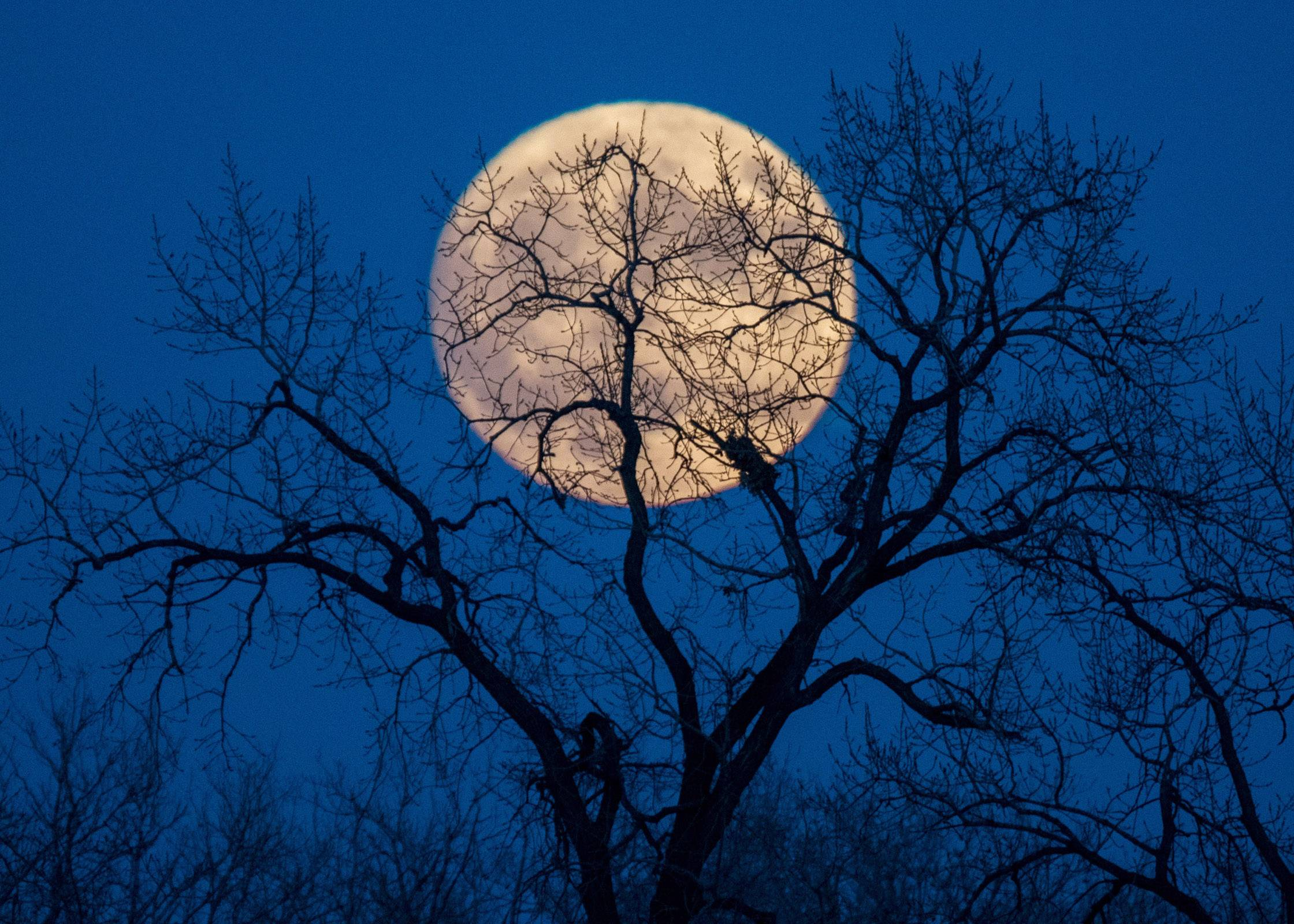 The super moon hides behind a leafless tree creating mystery in Mount Prospect on November 13.