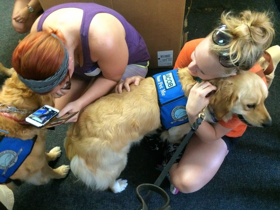 People affected by the Pulse nightclub shooting in Orlando visited with a golden retriever from Lutheran Church Charities' K-9 Comfort Dogs. It's one of many charities millennials donated to on Giving Tuesday.