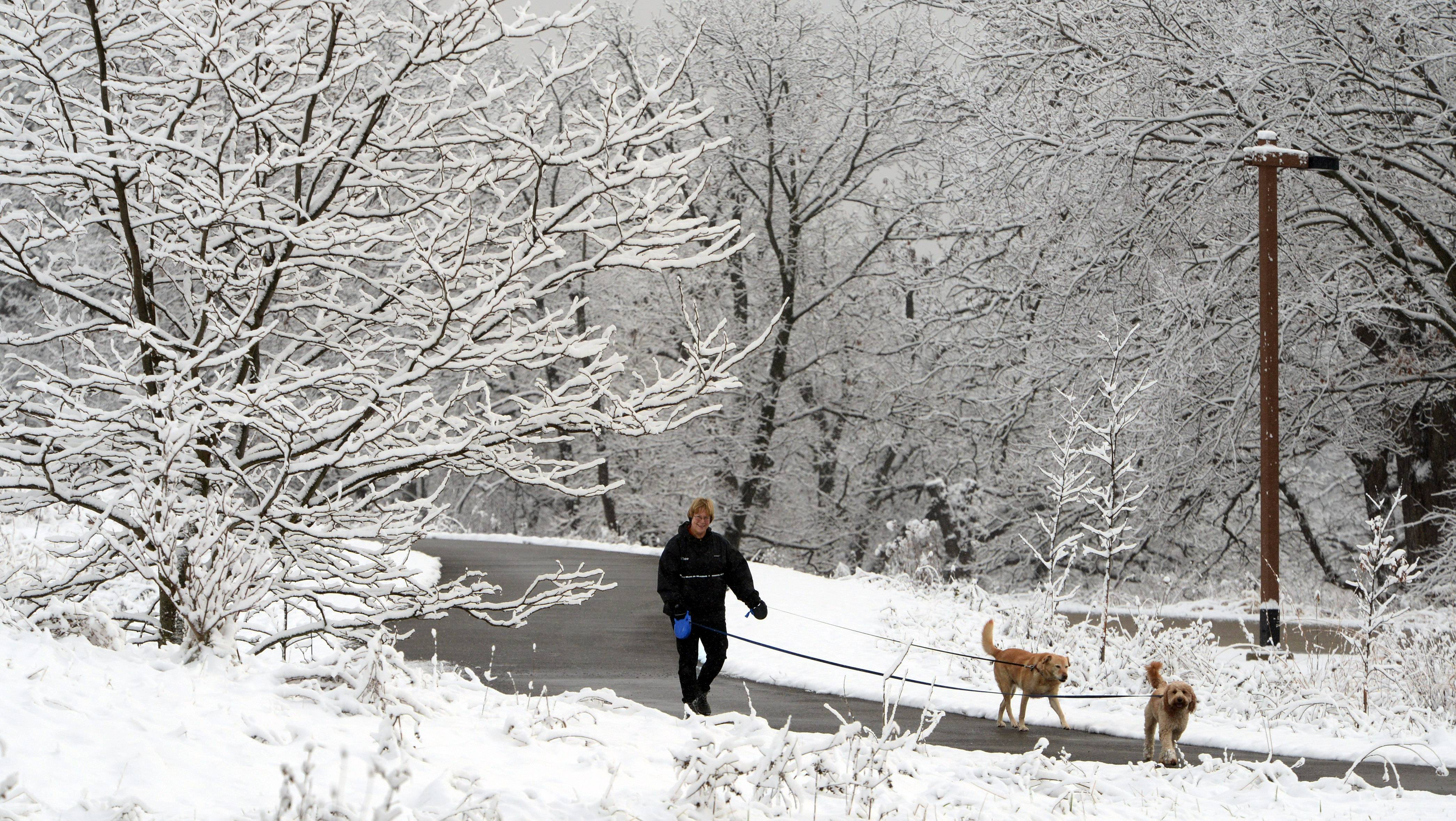Sandy Stoub of Wauconda enjoys a snowy walk with her dogs last December in the Fox River Preserve near Island Lake. This scene could be repeated Sunday, as forecasters predict accumulations of 2 to 4 inches.