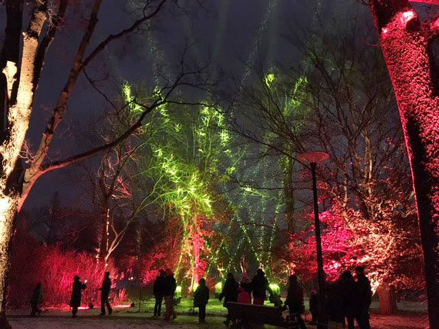 Spectators enjoy a beautiful evening at the Morton Arboretum after the fresh fallen snow mixed with the dancing light displays on Saturday, December 10 to create a magical show.
