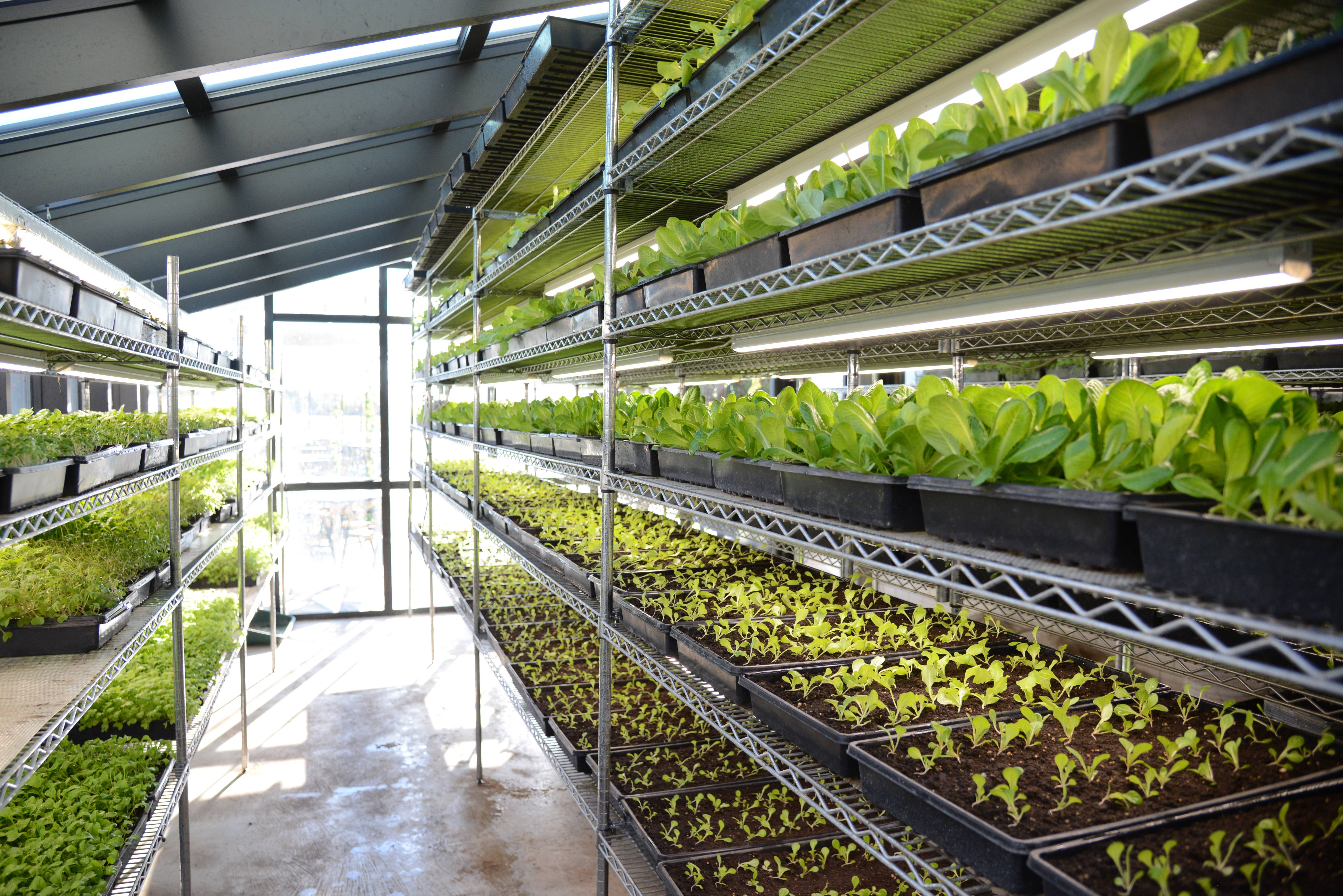 North Aurora's Hardware grows lettuce, herbs and micro greens in a greenhouse attached to the restaurant.
