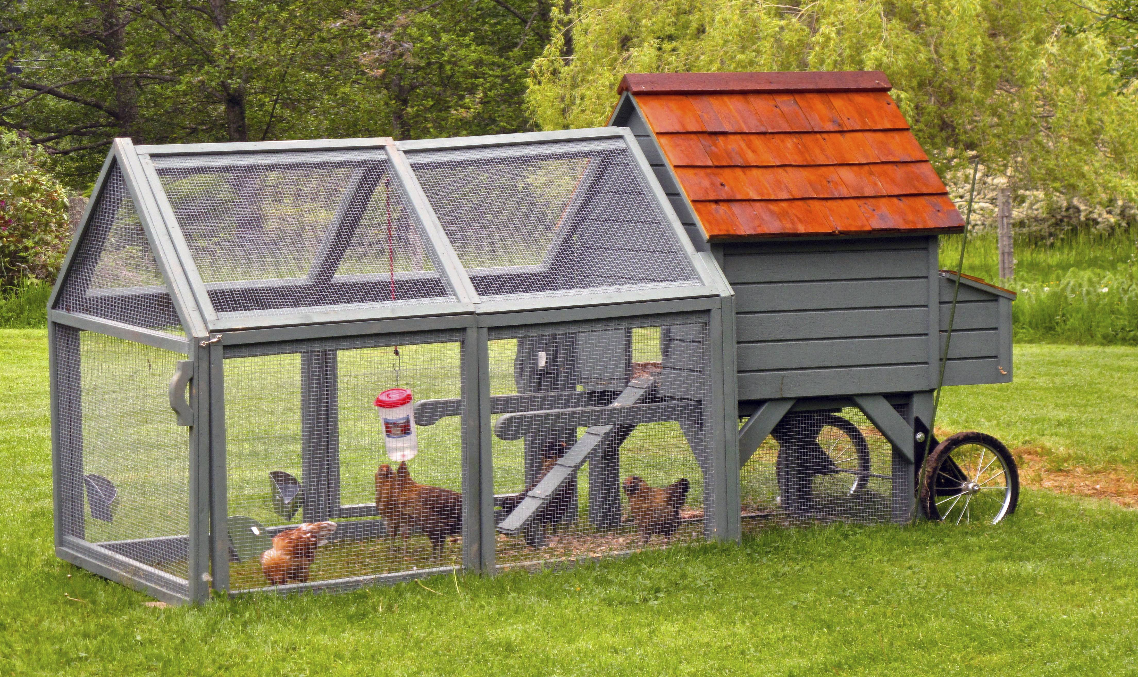 Five Hens Share A Chicken Tractor And Portable Coop. Put Your Backyard  Chickens To Work