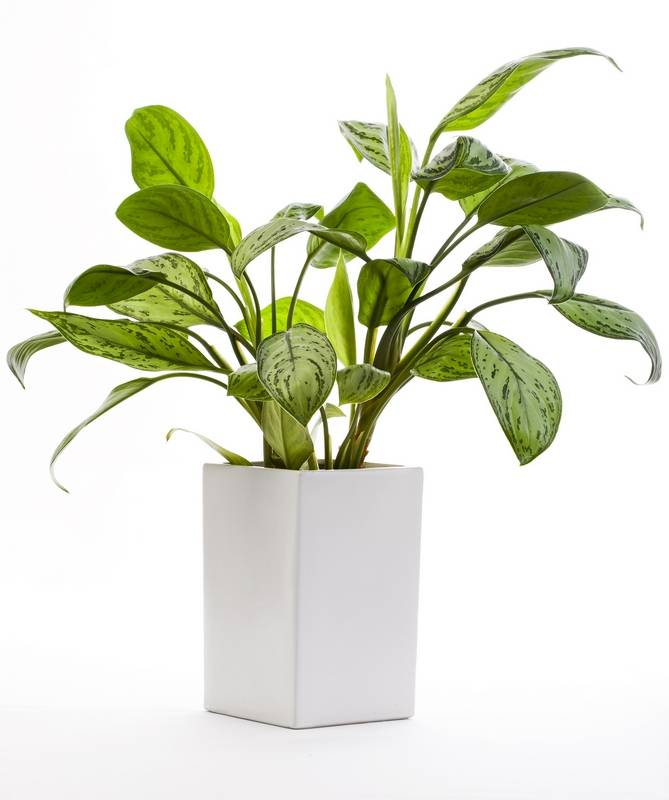 Seven best indoor plants for fall and winter