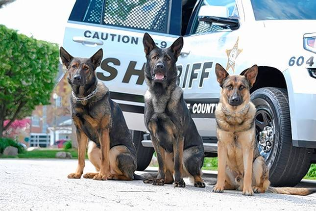 Here are three of four German shepherds on Lake County sheriff's police canine units. Combined donations of about $32,600 from a Libertyville charity have been made to help pay care and training expenses for Gurnee police and sheriff canine units.