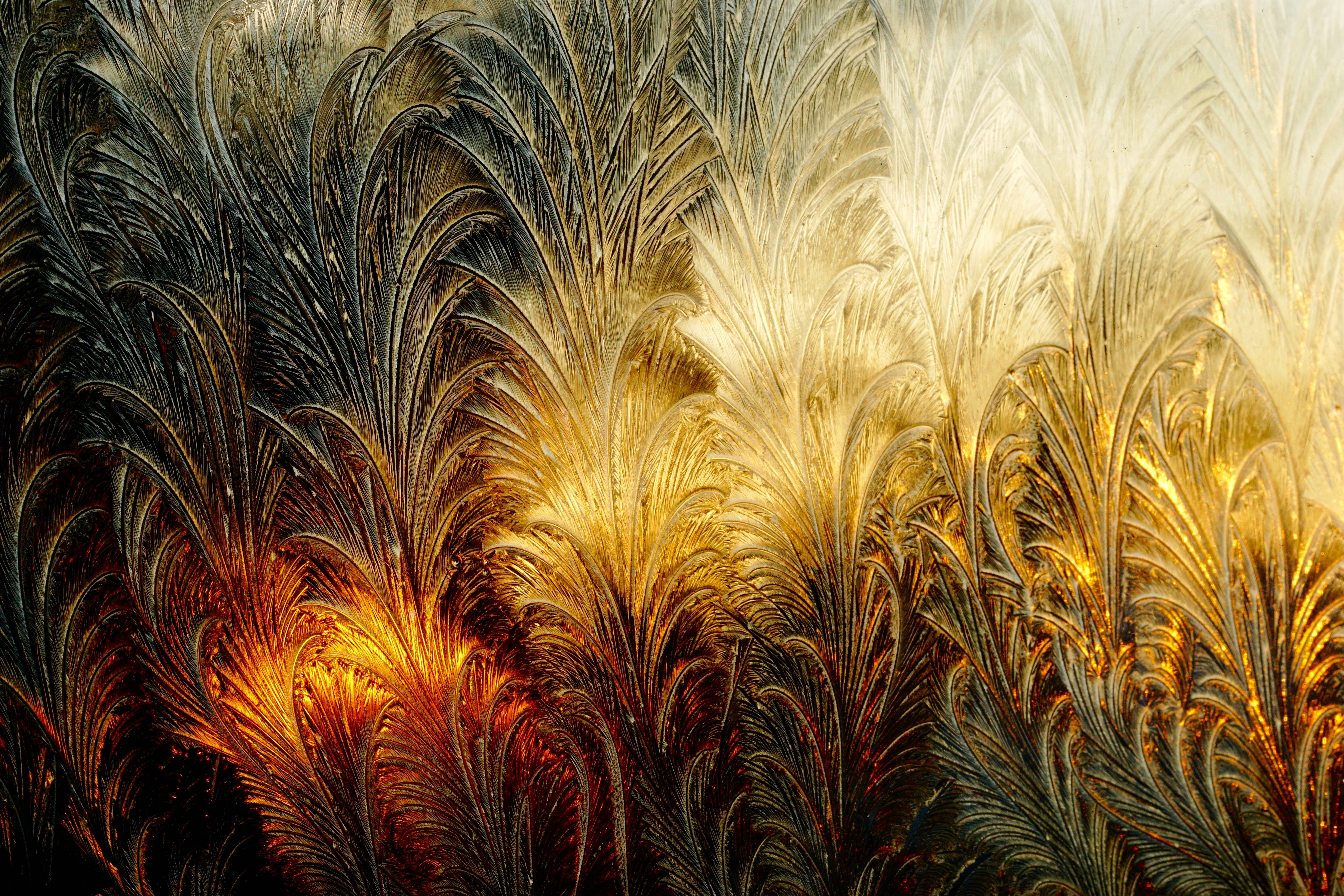 This is a photograph of frost patterns on our bedroom window backlit by the warm rays of the setting sun. It was taken with a macro lens on the coldest day of this past December, when the temperature dipped below zero. The amazing frost shapes remind my wife of a field of wheat, and I imagine a group of large palms.