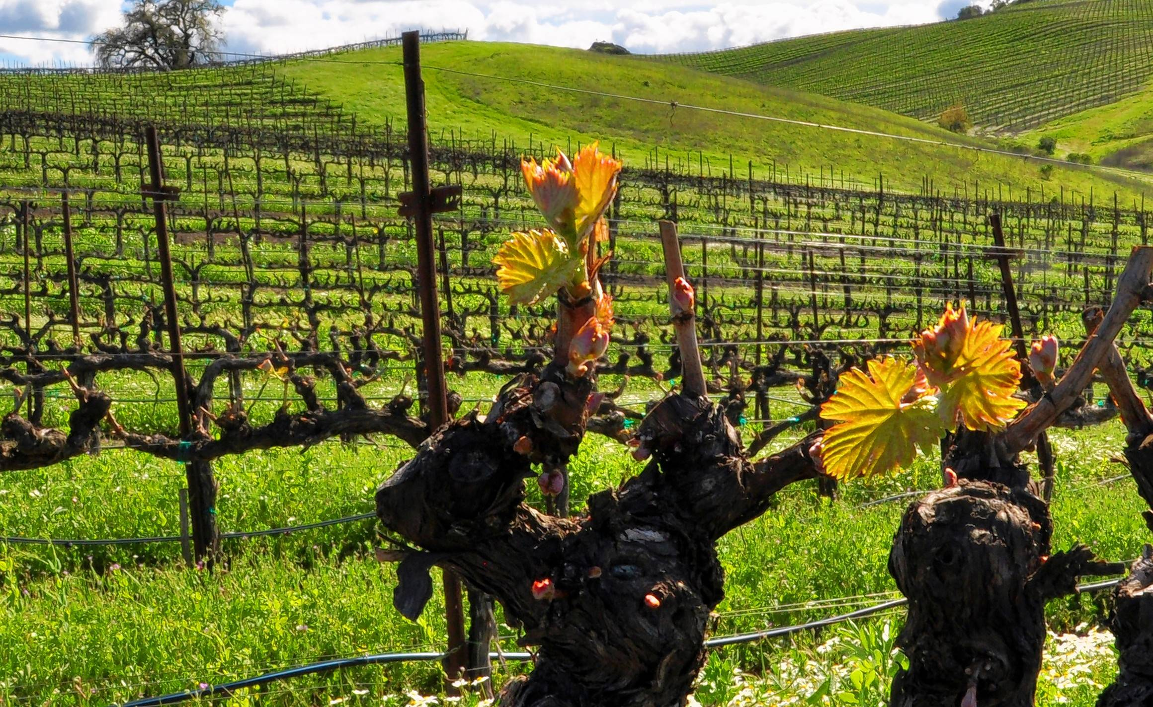No Whining On Hiking Biking Tours Along Sonoma County