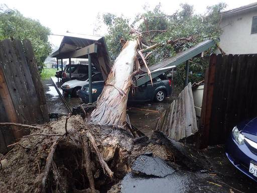 In this image released by the Santa Barbara County Fire Department, a large eucalyptus tree toppled onto carport damaging vehicles in Goleta, Calif., Friday, Feb. 17, 2017. A powerful Pacific storm blew into southern and central California on Friday, unleashing wind-driven heavy rains that forecasters said could become the strongest in years if not decades. (Mike Eliason/Santa Barbara County Fire Department via AP)