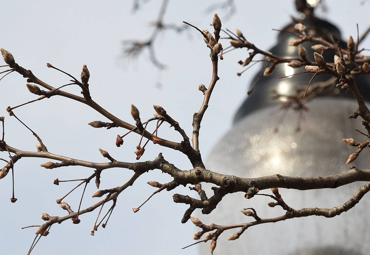 Leaf buds were already starting to show Monday on a tree in Arlington Heights as the suburbs saw another day of record warm temperatures. An expert at the Morton Arboretum in Lisle said this week's weather shouldn't have much long-term impact on the health of suburban trees.