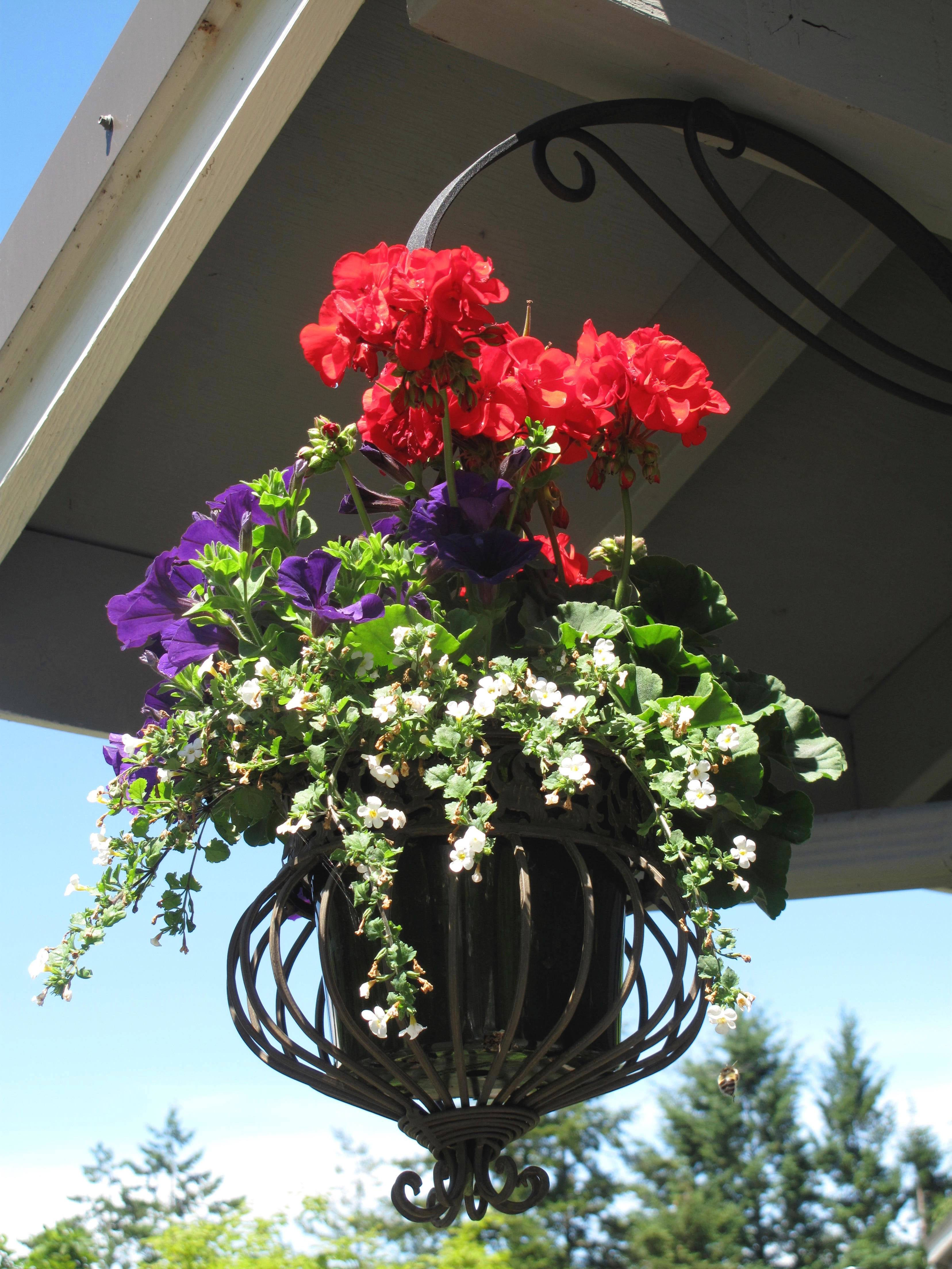 Hanging baskets on a carport make for a colorful welcome as visitors pull into the yard. Shop around at thrift or antique shops for decorative containers like this Victorian model to add some personality to the presentation.
