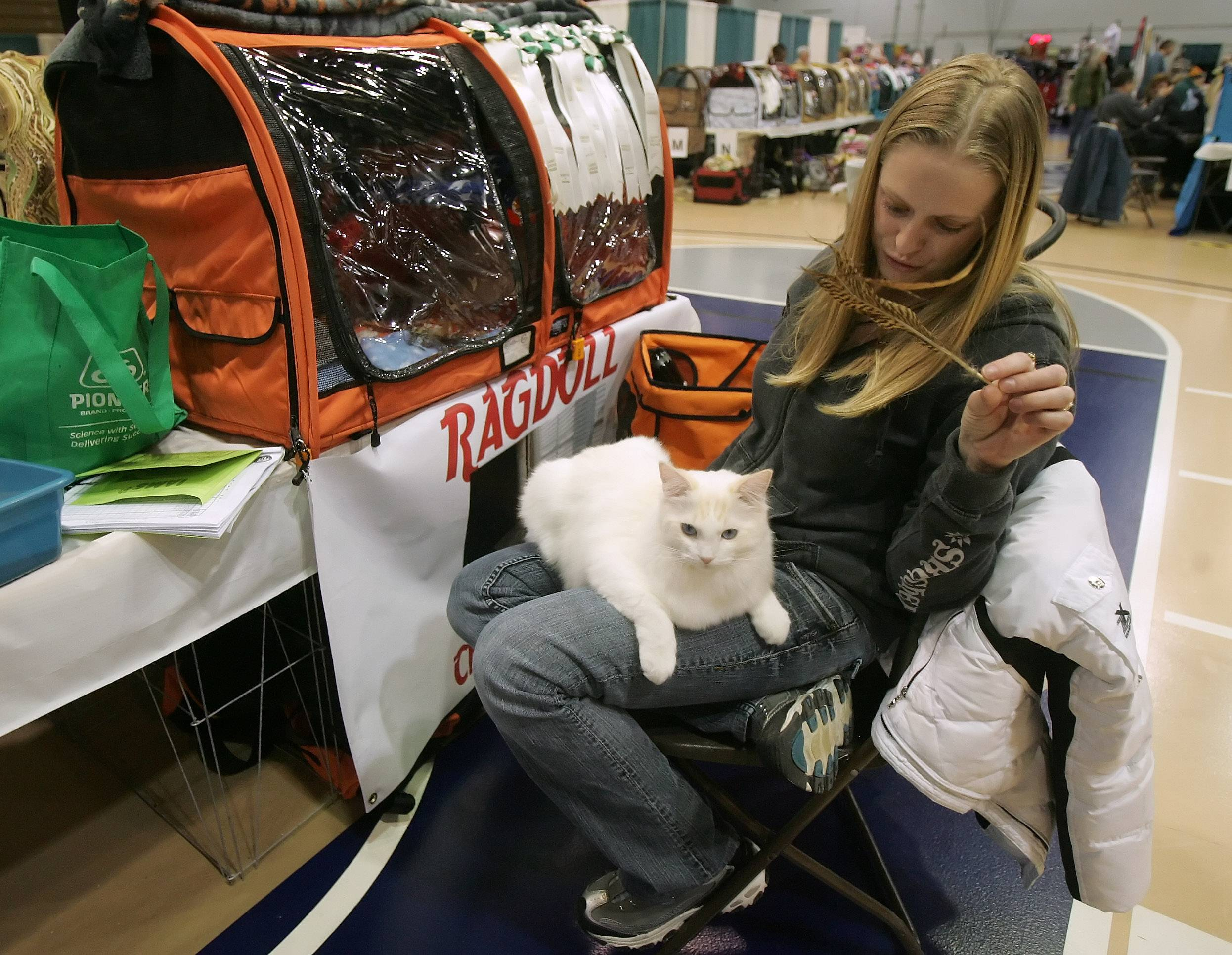 Ashley Michelson of Des Moines, Iowa, plays with Celestrail Otis, a Ragdoll cat, during the 53rd annual Lincoln State Cat Show, which is being held this year at the Kane County Fairgrounds in St. Charles.