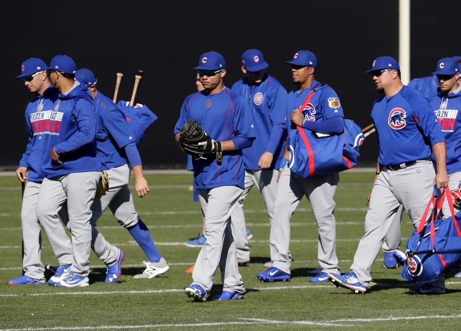 Chicago Cubs players arrive for workouts during a spring training baseball practice, Friday, Feb. 24, 2017, in Mesa, Ariz.