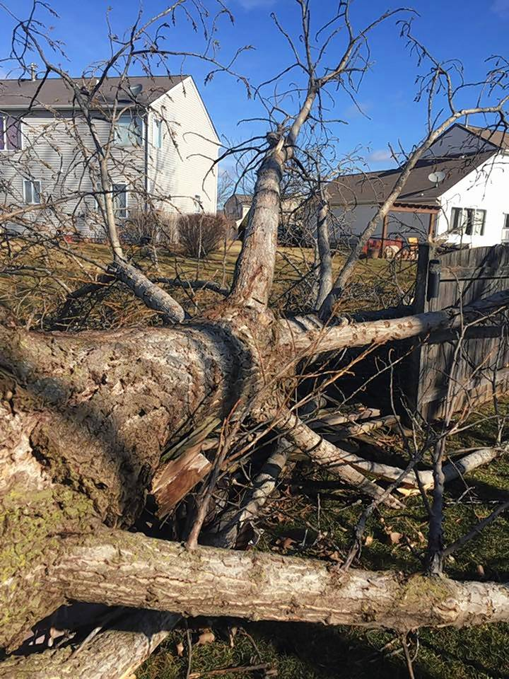 Tracey George of Antioch found this large tree fallen in her backyard from the strong winds Wednesday.