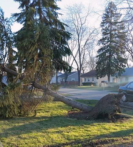 Deborah Hauter of Lake Villa caught this pine tree swaying from the wind gusts Wednesday at Piper Lane and Monaville Road in Lake Villa.