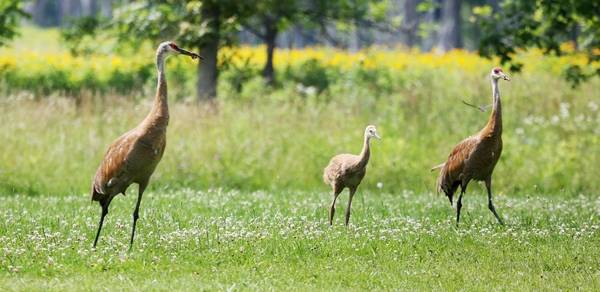 Learn from the Experts\' program to focus on the life of sandhill cranes