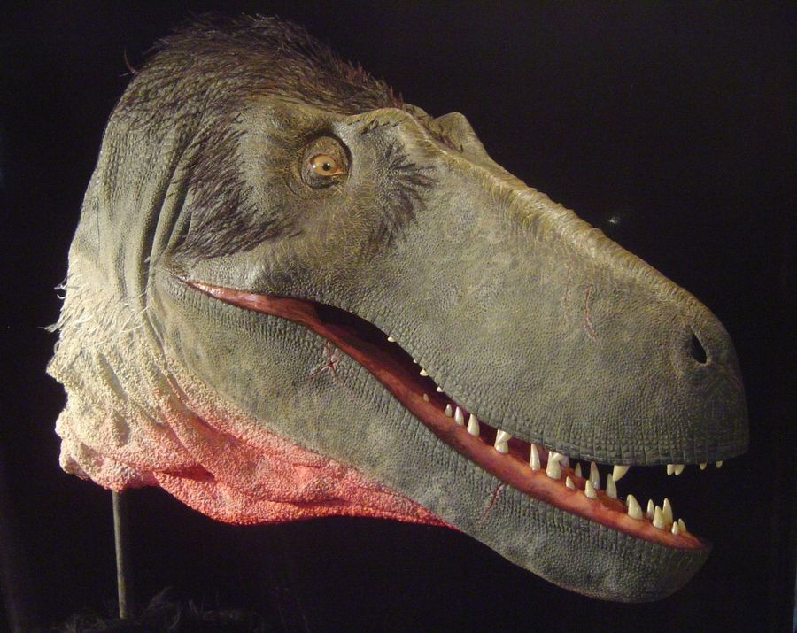 This model head of a Dryptosaurus was used in 2009 as part of the Prehistoric Lake County exhibition at the Lake County Discovery Museum. The forest preserve plans to commission the creation of a full-size Dryptosaurus to be installed in time for its reopening later this year.
